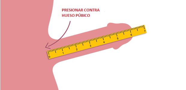 medición del pene